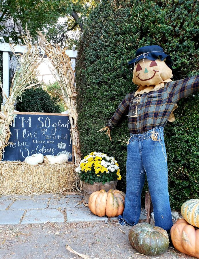 IF I ONLY HAD A BRAIN – A SCARECROW STORY