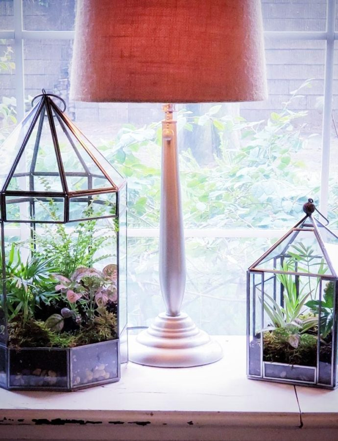 HOW TO MAKE A TERRARIUM FOR YOUR HOME