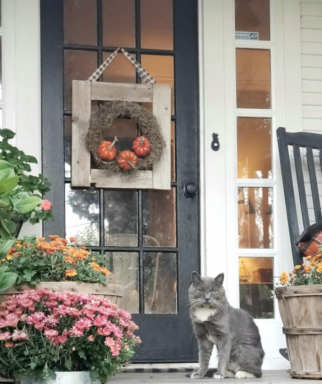 Porch entryway with cat