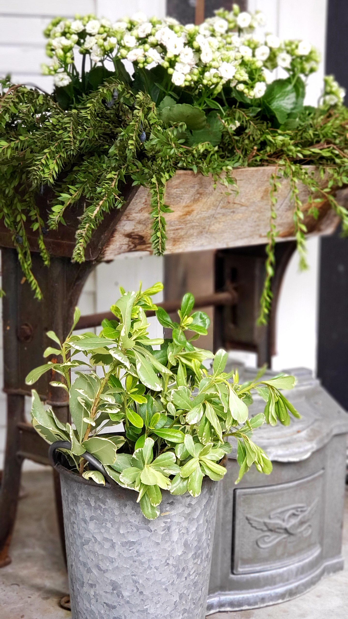 winter Greenery on Porch